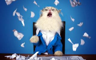 Принцип Питера или почему большой начальник как правило некомпетентен?