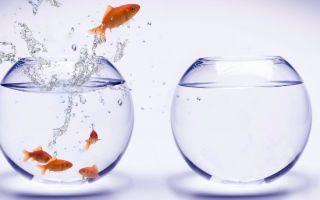 Целеустремленность. Простые способы стать целеустремленным!