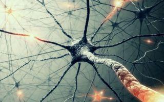 10 способов увеличить уровень допамина в мозге!