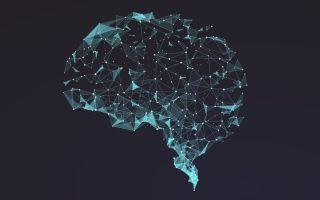 Нет боли — нет стимула для мозга: почему обучение требует (немного) дискомфорта?!