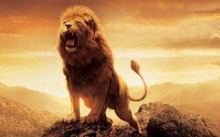 БОЕВОЙ ДУХ: ПОДНИМАТЬ ИЛИ «И ТАК СОЙДЕТ»