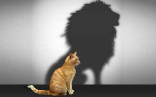 Уверенность в себе = успех!